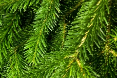 green pine needles background